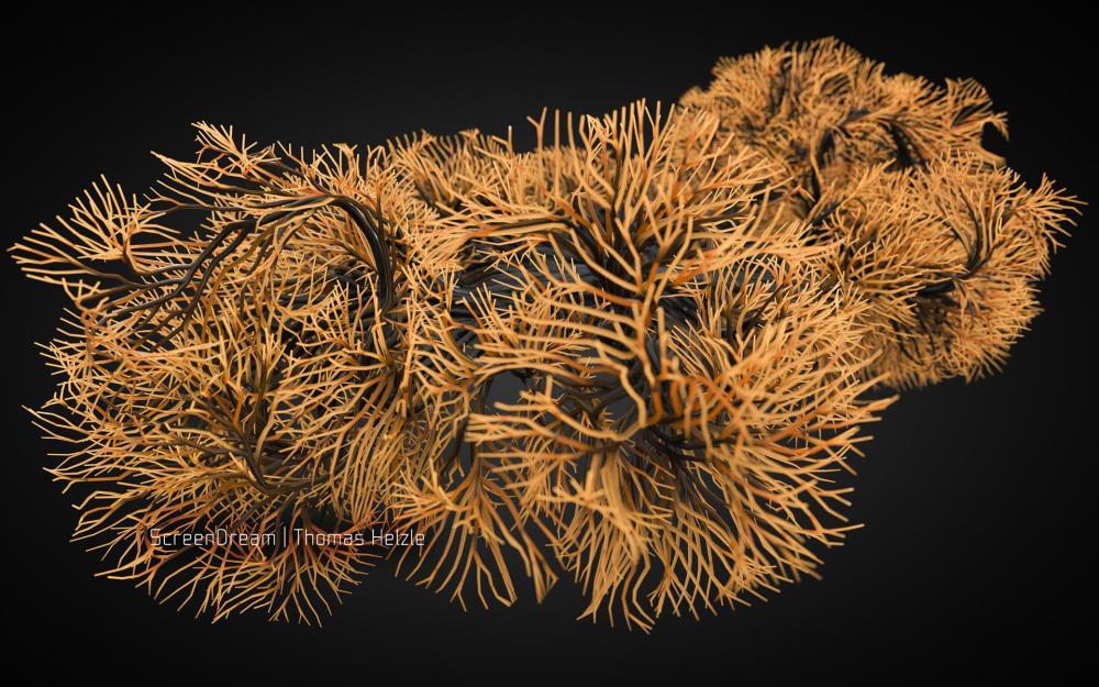 CoralStructure2.jpg