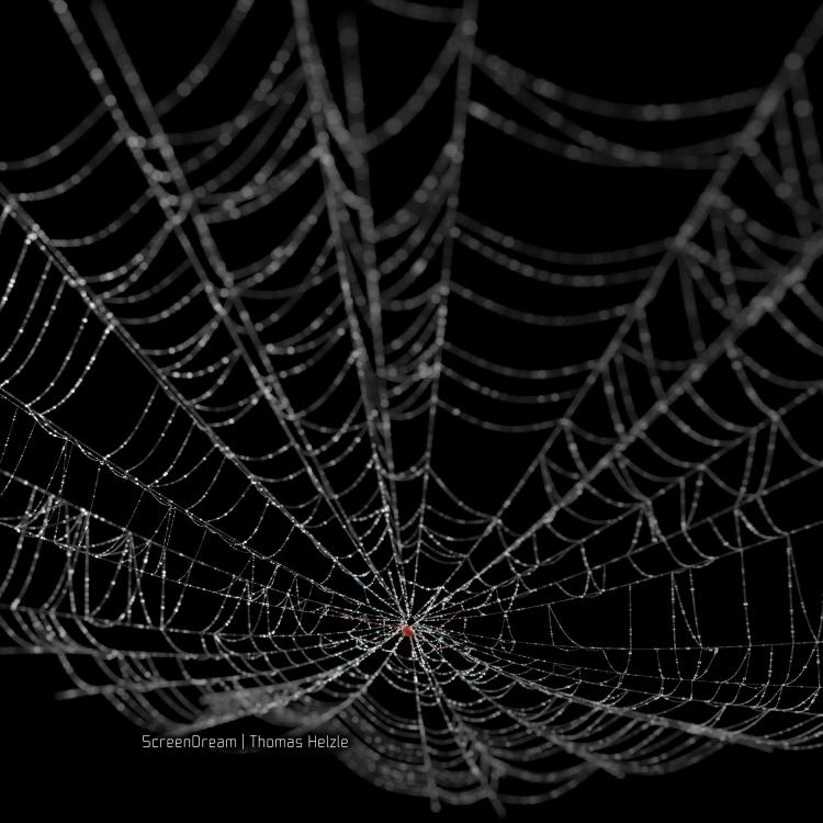 SpiderWebDewSquare.jpg