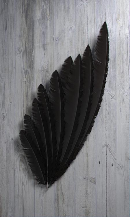Feather11.jpg