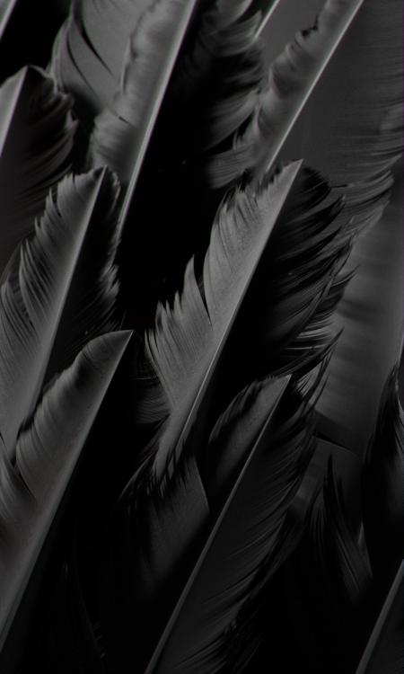 FeatherBW.jpg