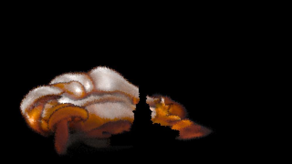 lower voxel resolution.jpg