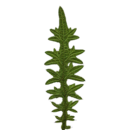 ras mid pine-1Leaf.png