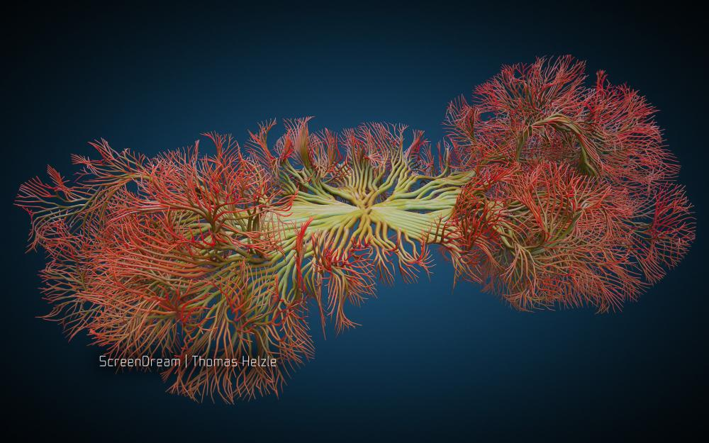 CoralStructure.jpg