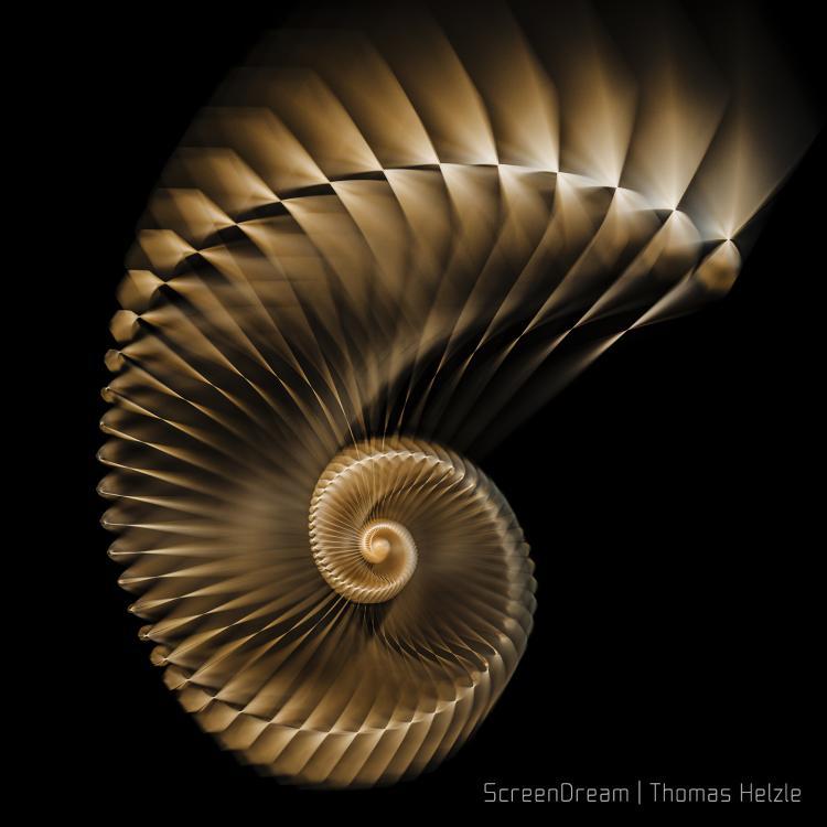 Shell_DOF.thumb.jpg.1485bb0e759f52d82451978fc8429f1a.jpg