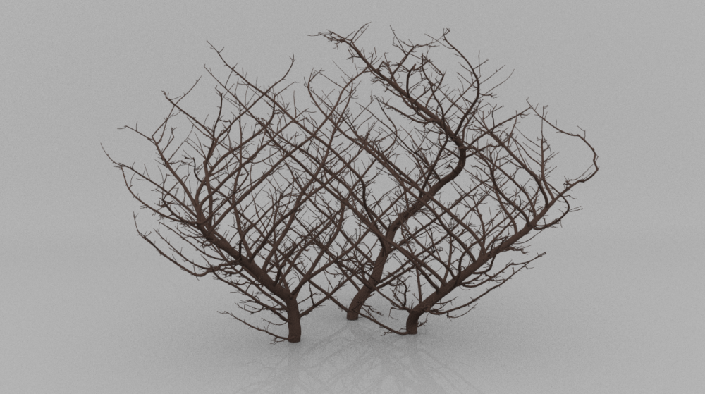 TreeWithoutLeaves.thumb.PNG.a259c748658cf249bc152cb8971f7678.PNG