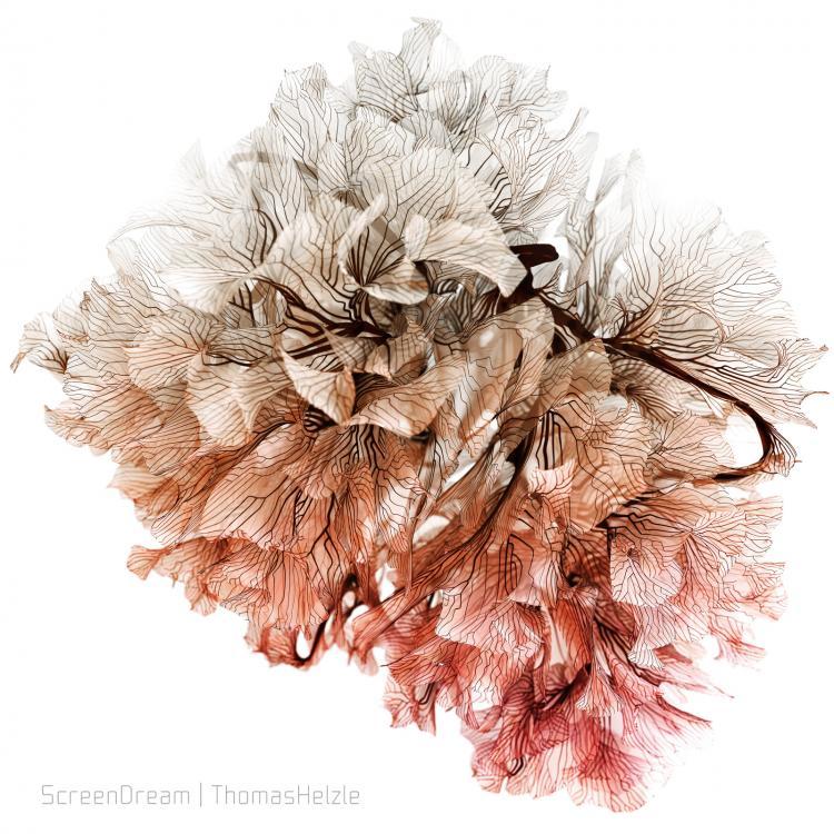 CoralGrowth_Splines3.thumb.jpg.1e866a00c8f043e3620cd2339e9dacf9.jpg