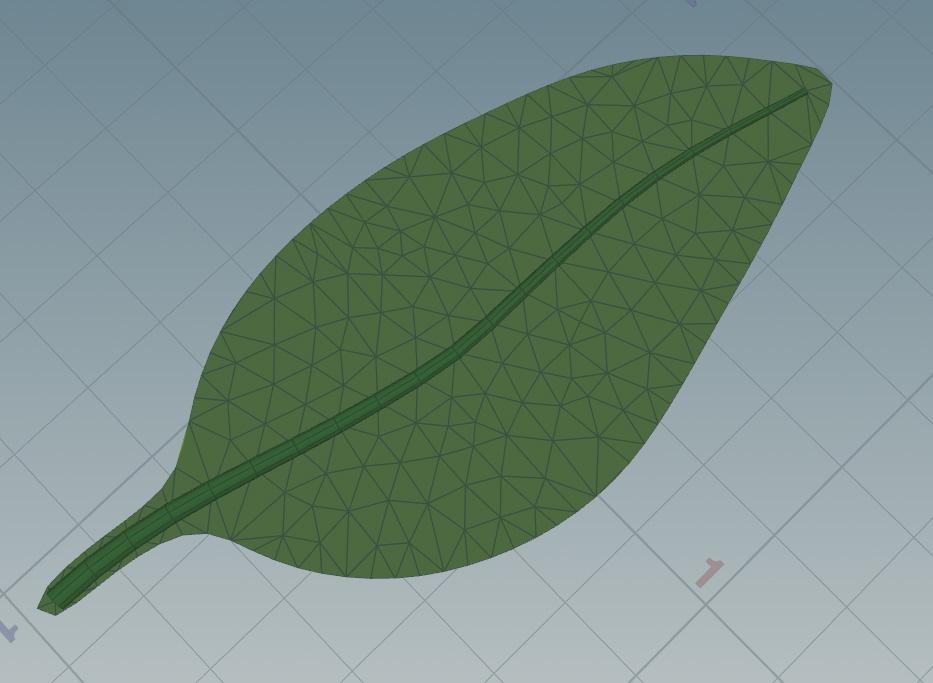 LeafStem.jpg