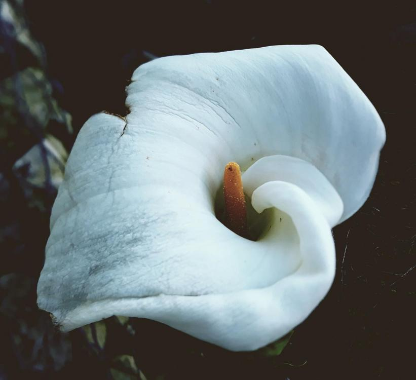 flower_01.thumb.jpg.716183a79e339079c62e06331a1f4724.jpg