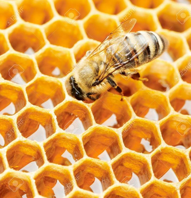working-bee-on-honeycomb.jpg