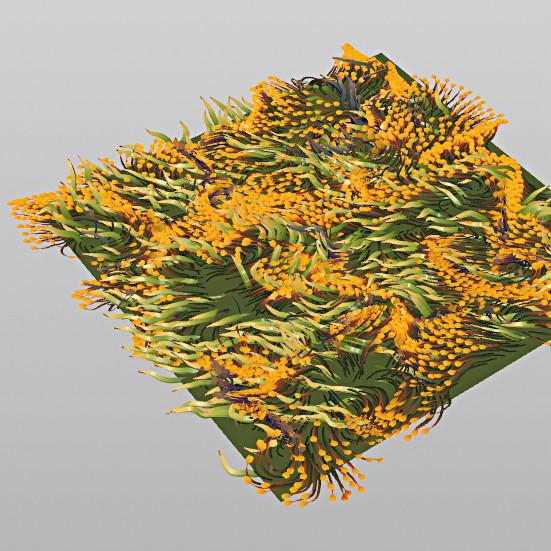 flower_field_02.jpg.b71f27a51e08bfc9ada4349337345df5.jpg
