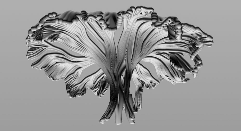 mushroom_11.thumb.jpg.a3f4369d62ddb6ac60f407c4606b2a46.jpg