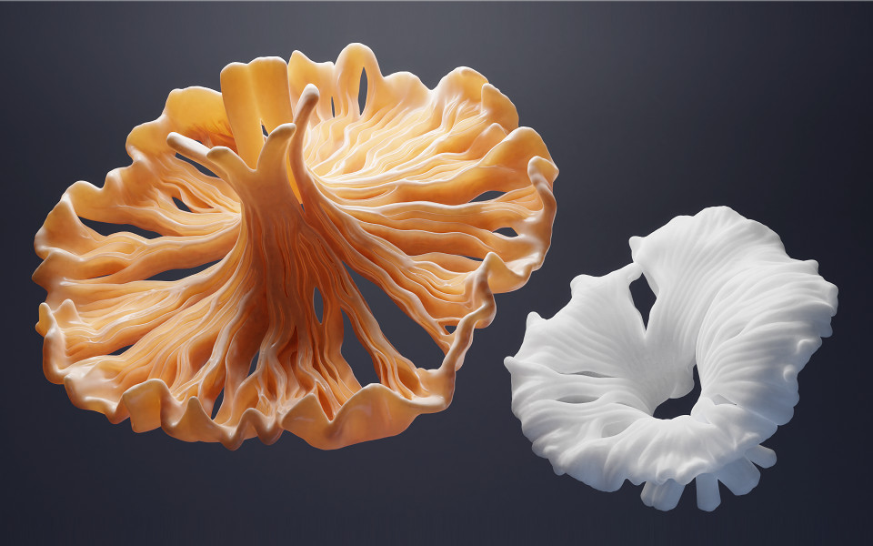 mushrooms_beauty_small.jpg.36cf6cf91ecea48e9fd6b156adde4e91.jpg