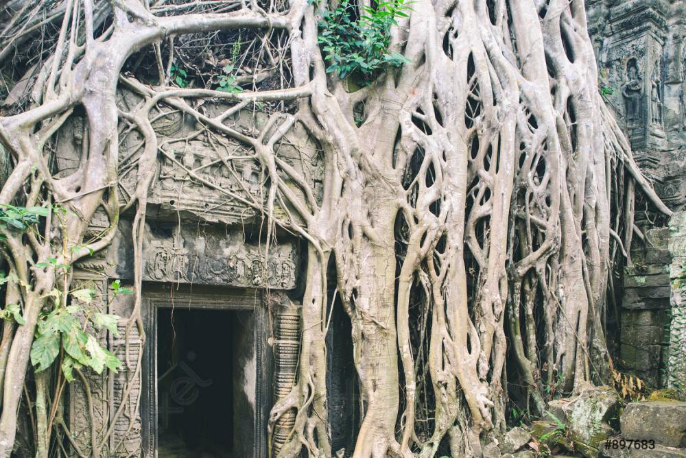 ta-prohm-famous-jungle-tree-897683.jpg