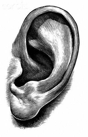 ear.jpg.6a23b46070a2f6ddaabece4659e8232c.jpg