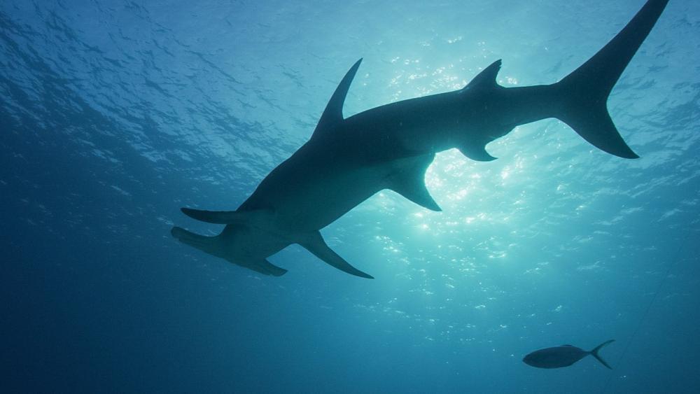 sharkcano.jpg