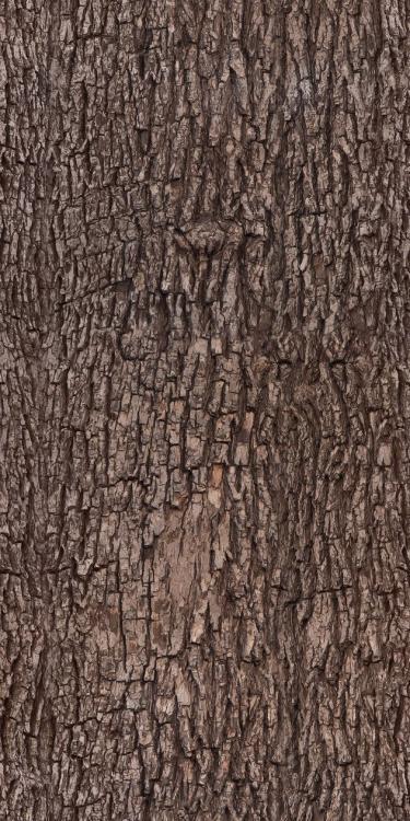 bark_01.jpg